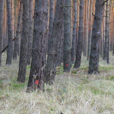 Mysteriöse rote Punkte im Kirchenwald - Gemeindekirchenrat von Brück-Rottstock verunsichert