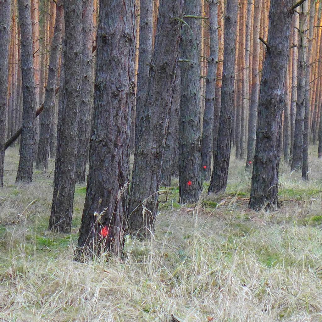 Markierte Bäume