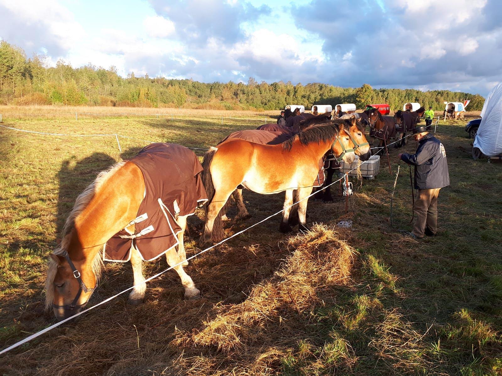 Pferde am Morgen - Titanen on tour in Russland