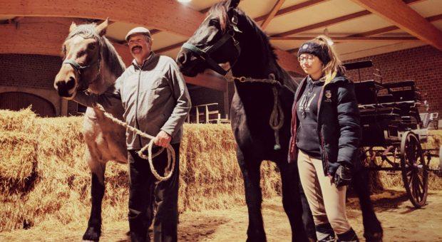 Titanen on tour - die letzten Pferde sind da