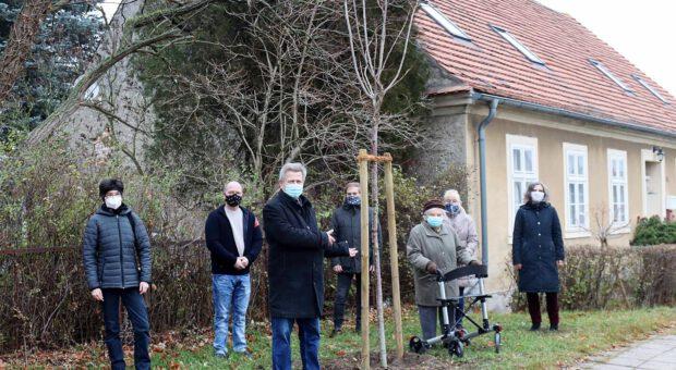 "Der "" Asse-Baum"" in Rottstock"